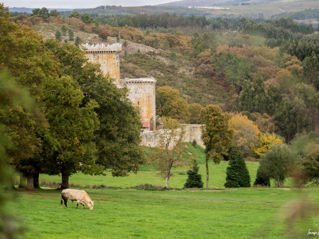 Nuestro castillo de Pambre